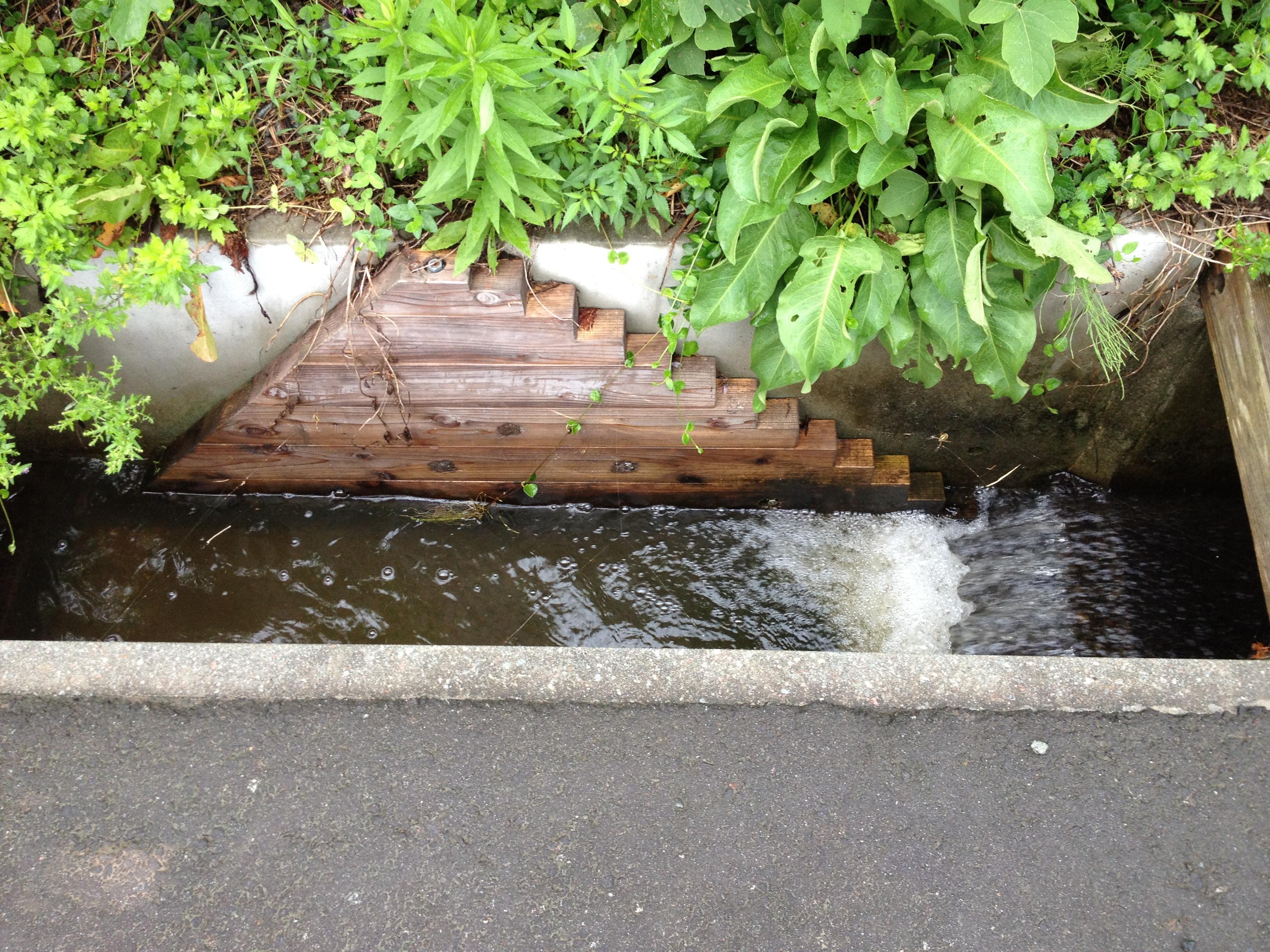カエルのための階段.JPG